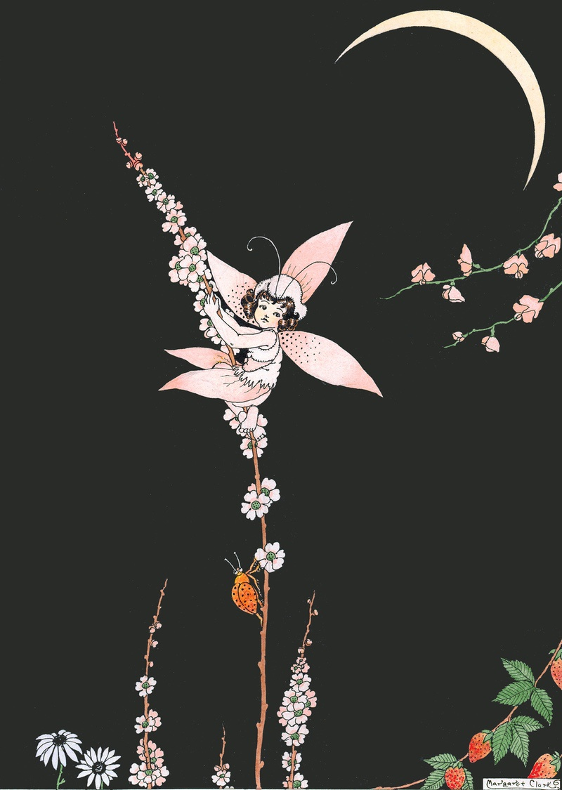 The Pink Orchid Margaret Clark Print